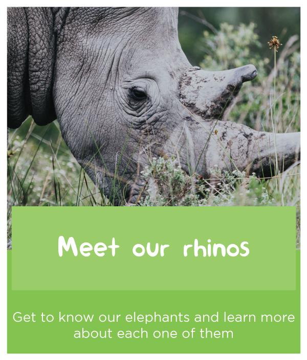 meet-our-rhinos.jpg