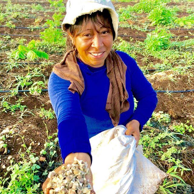Te presentamos a Doña Ady, ella trabaja en Sanam desde hace casi un año. Hoy generamos empleos para 25 mujeres en comunidades mayas. ¿Quieres impulsarnos? ¡Compra nuestros productos en sanam.mx!