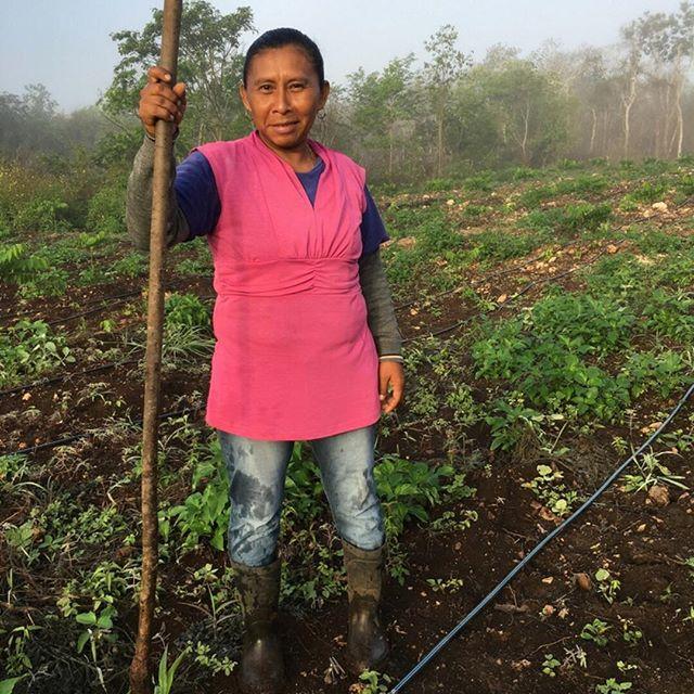 LA SIEMBRA . . . . . . . . . . . . . #moringa #socialimpact #womanempowerment #employment #gogreen #conciousbusiness #negociossociales #agricultura #semillademoringa #moringaseeds