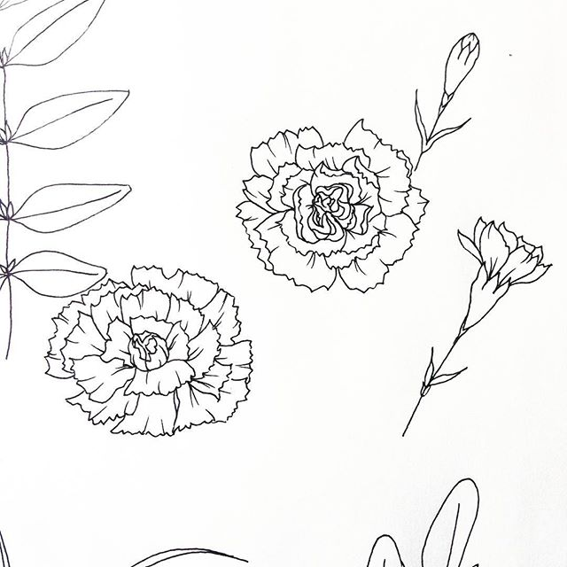 And the coloring book coloring continues.  #bloomingintherough #carnations #flowers #floral #design #drawing #sketch #coloring #coloringbook #art #artist #artistsoninstagram #ink #pen #pencil #adultcoloringbooks #adultcoloring