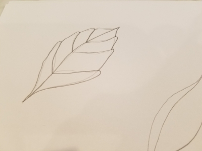 Easy tutorial on how to draw three types of leaves
