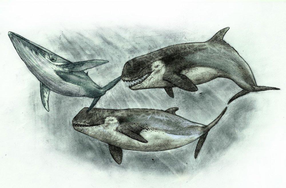 Ilustración de la bestía marina de Río Negro Sebastián Rozadilla.jpg