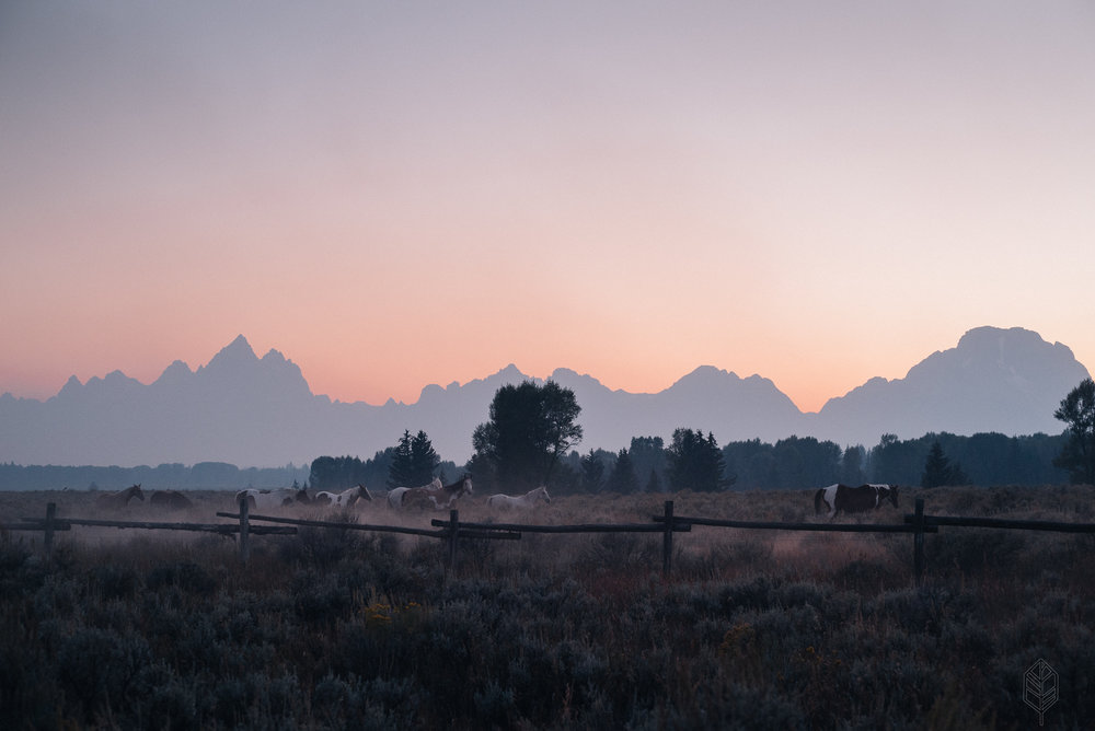 Grand Teton Horses