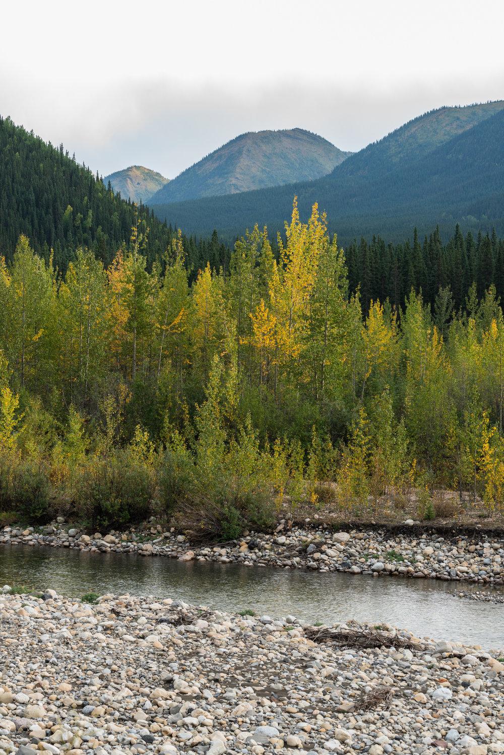Fall Colors, Northern Rockies