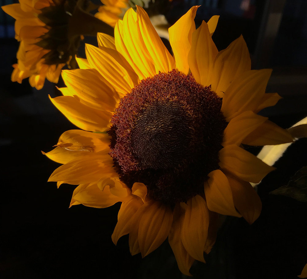 POCKITUDES-GRATITUDE-JOURNAL-SUNFLOWER.jpg