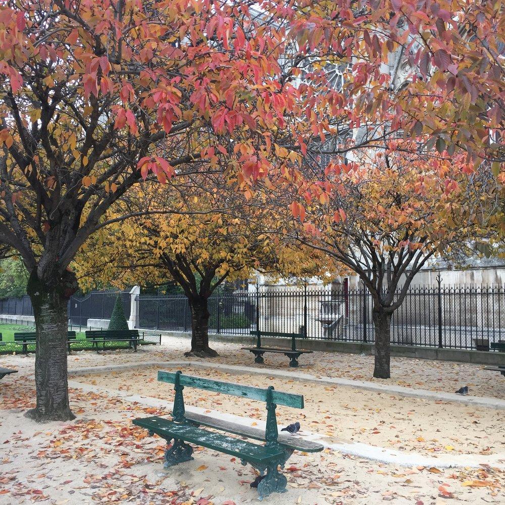 Fall in Paris = Absolutely beautiful!