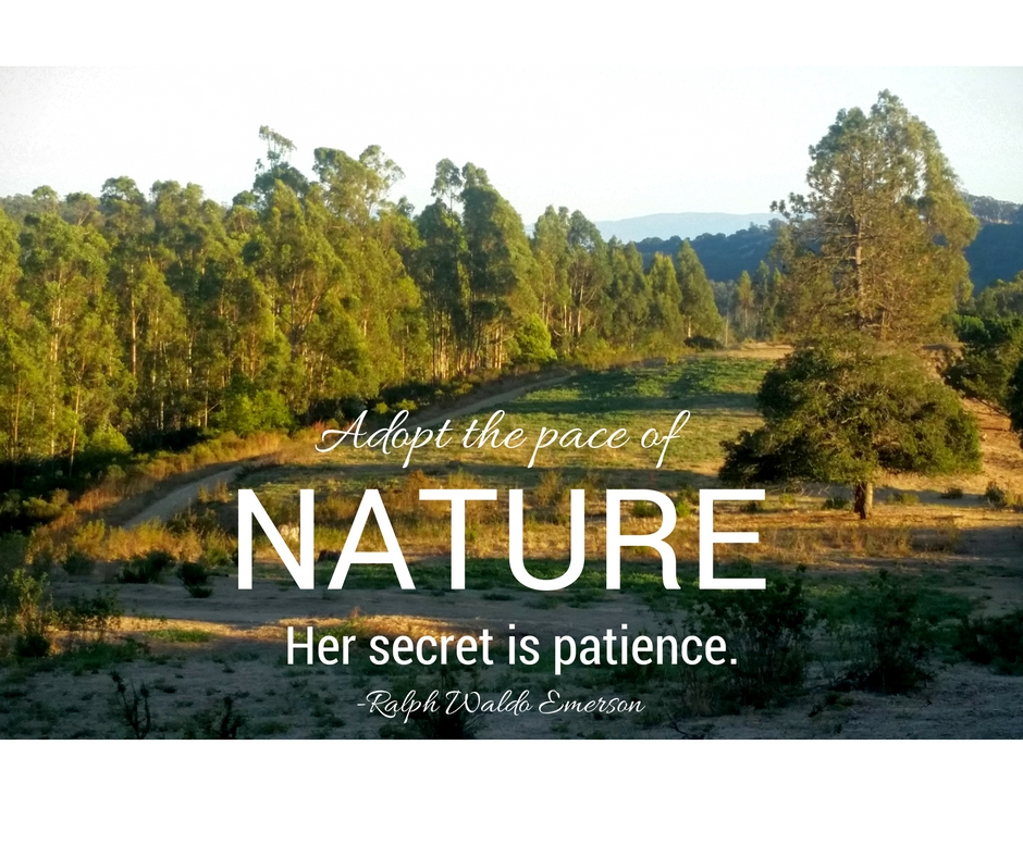 nature-emerson-quote.jpg