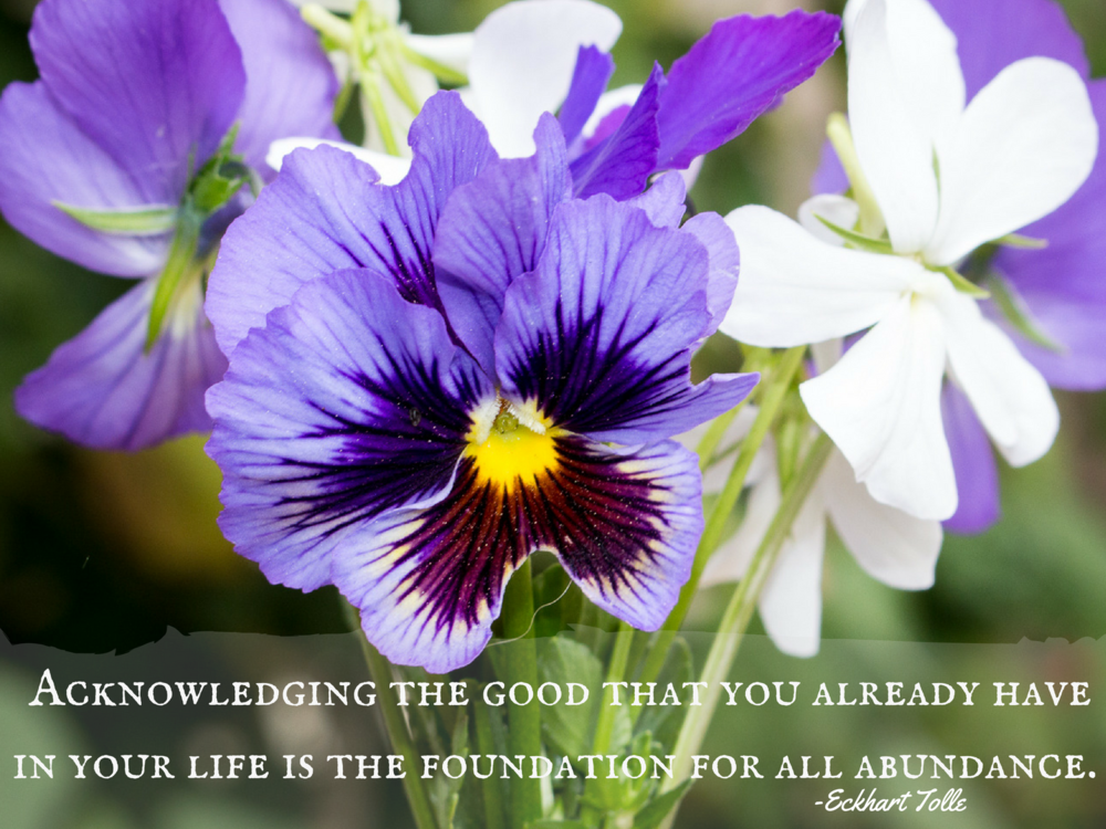 pansies-abundance-gardening-eckhart-tolle-inspirational-quote.jpg