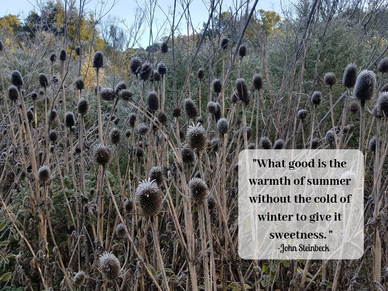 winter summer seasons change.png
