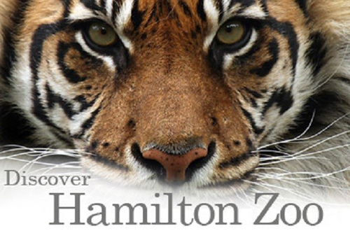 HAMILTON ZOO   Hamilton Zoo is the main zoological garden of Hamilton, New Zealand. Covering 25 hectares, it is situated on Brymer Road in the Hamilton suburb of Rotokauri, on the outskirts of the metropolitan area towards the northwest.