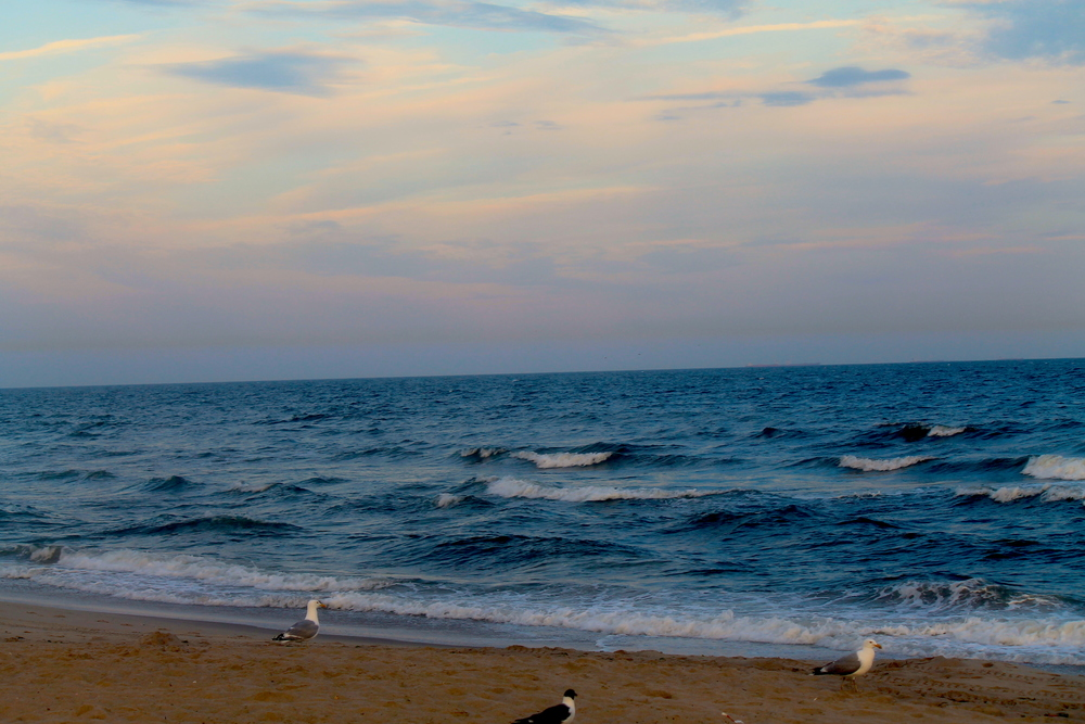 Gulls On An Evening Shore