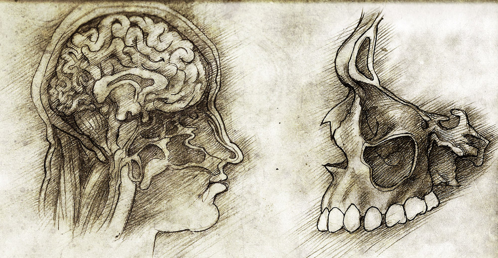 Internal organs – Graphite and ink on paper. Internal structure of the nasal conchae and human brain.