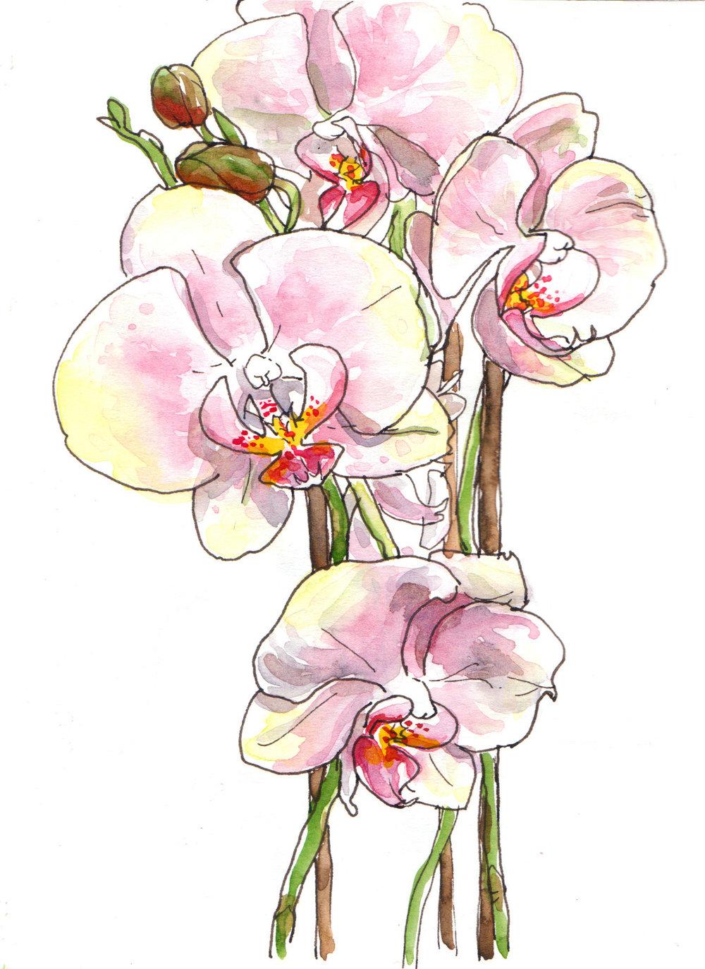 2013-05-03_Orchids.jpg