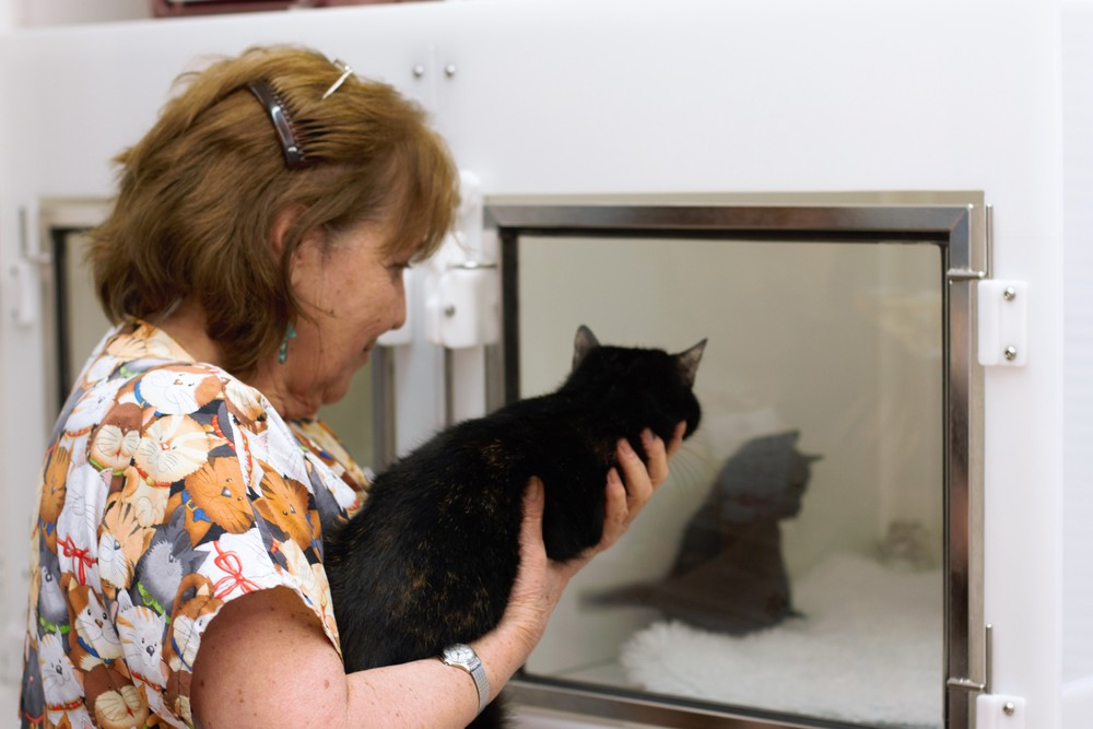 Our cat ward has ICC recommended plastic cat kennels with glass doors, which cats prefer..
