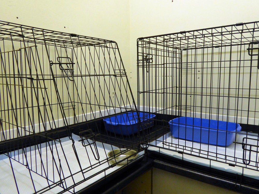 Our recent addition, the new Rabbit Ward. Solely for your smaller pets, so they feel safe..