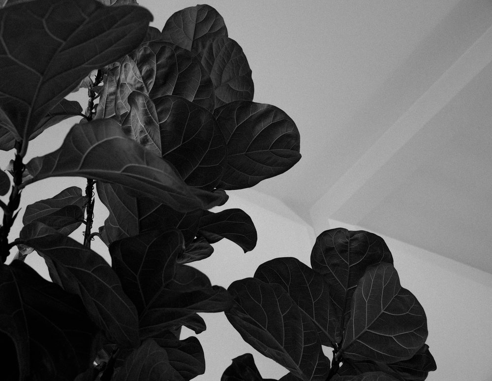 untitled-22.jpg