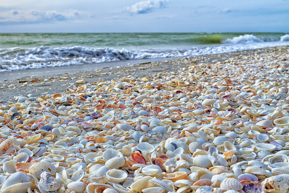 Credit Image: https://beachblissliving.com/sanibel-island-worlds-best-shelling-beaches/