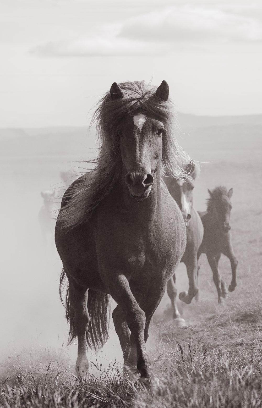 Mare & Foals
