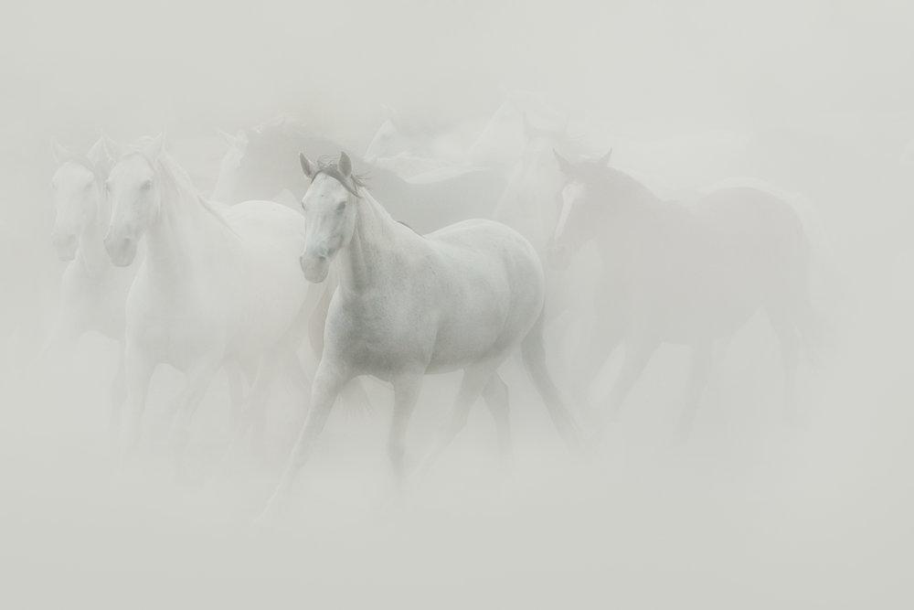 Dust I