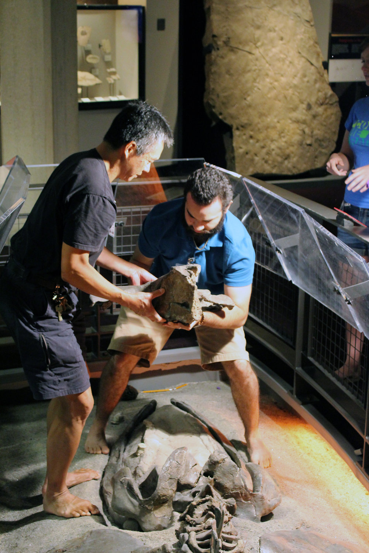 Assembling an Oligocene whale