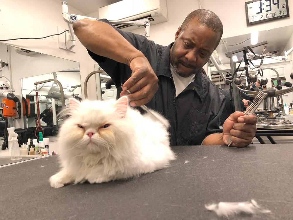 grooming2.jpg
