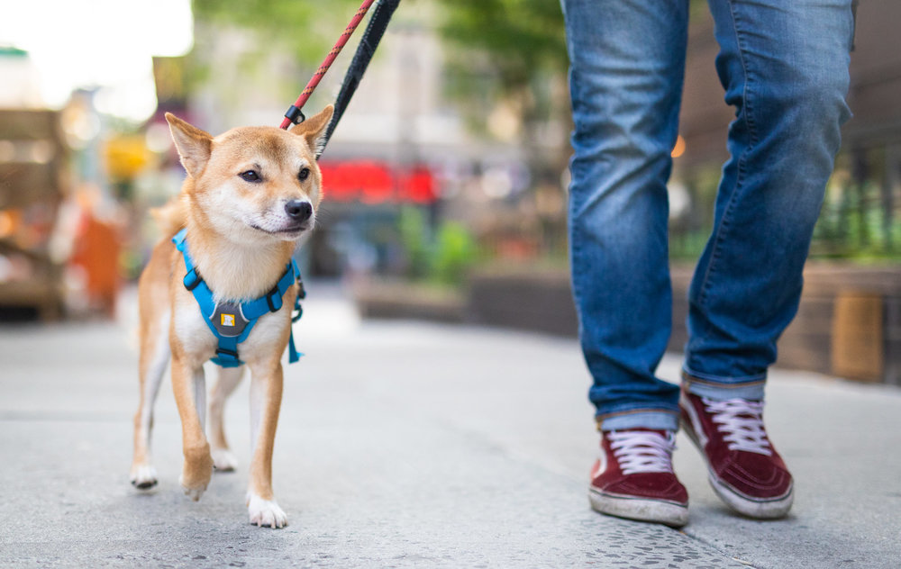 dog-walking-nyc.jpg