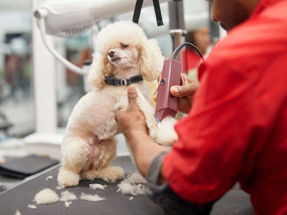 walters-pet-styles-dog-grooming-nyc.jpg
