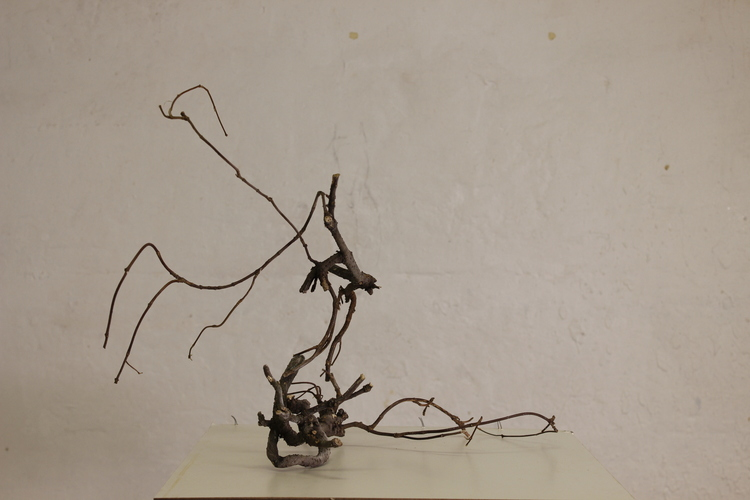 Interrupted Healing, (side view) tree root, tree branch, steel bar, 66 x 44 x 42, 2016