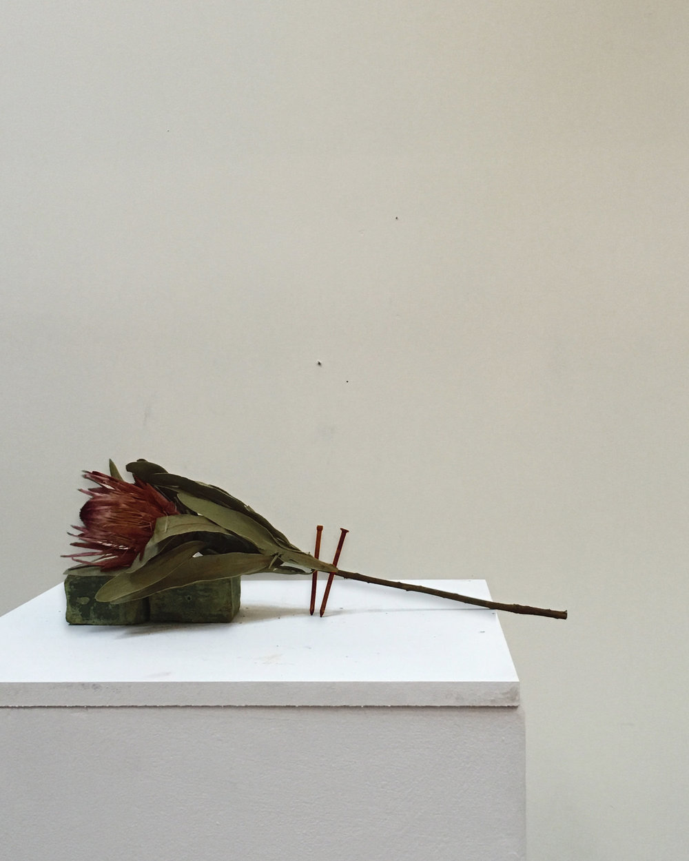 Through Lungs, protea, olive soap, rusted nails, 22 x 82 x 18 cm, 2016