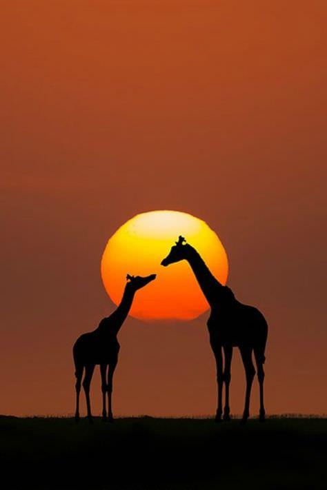 NICOLAS SIOEN & rooibos-south-africa.11.jpg