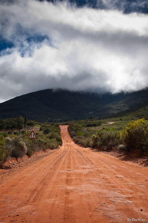 NICOLAS SIOEN & rooibos-south-africa.14.jpg