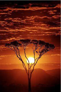 NICOLAS SIOEN & rooibos-south-africa.15.jpg