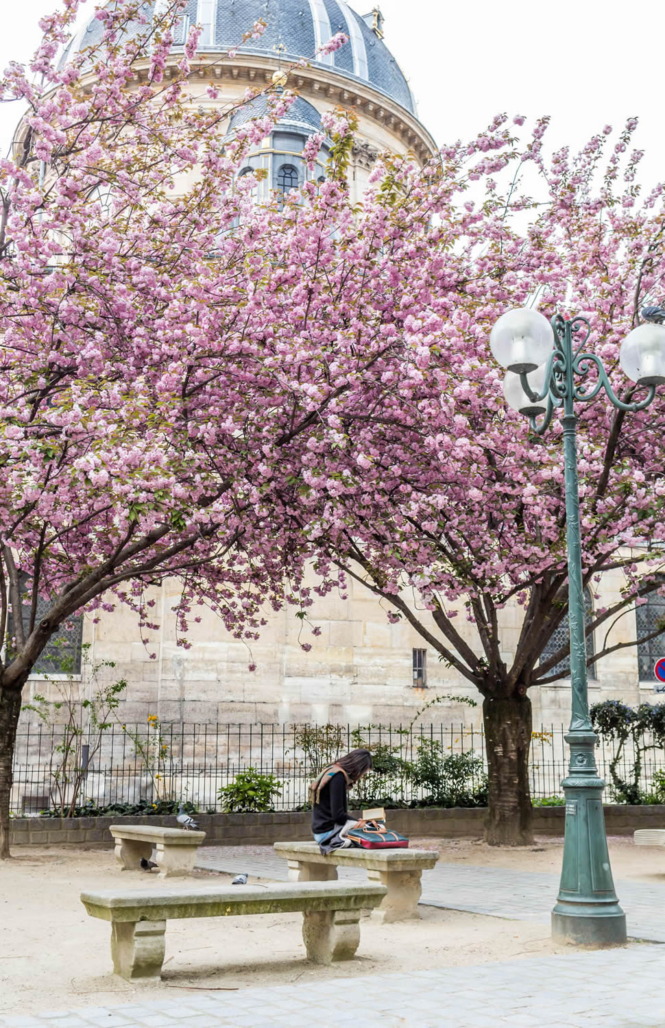 cherry-blossom-institut-de-france.jpg