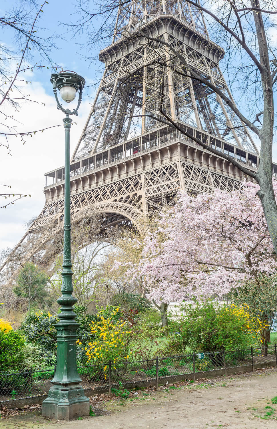 cherry-blossom-eiffel-tower.jpg