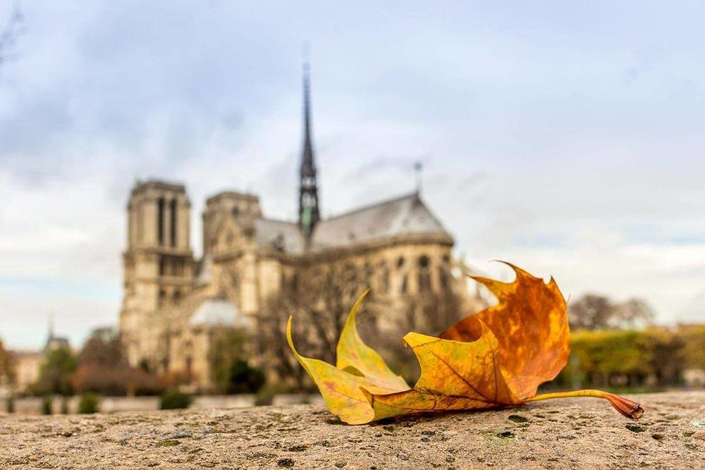 Autumn-in-Paris-14.jpg