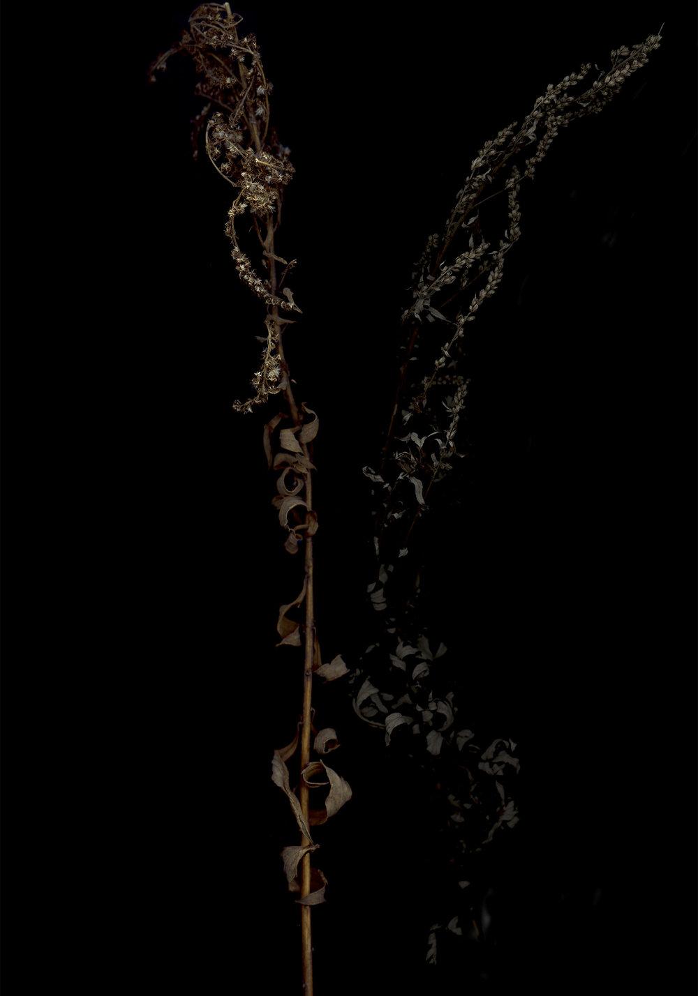 anna-skladmann-der-schwerbelastungskoerper-lunar_black_pair_tp_rt_000-ward.jpg