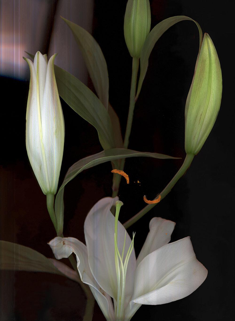Ghost in the machine understanding the language of flowers anna anna skladmann lilywebg oriental lily izmirmasajfo