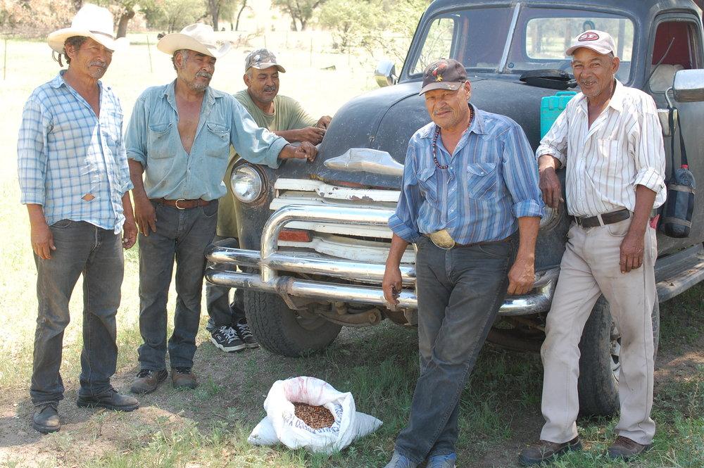 Pajareros Belloteros de Sonora