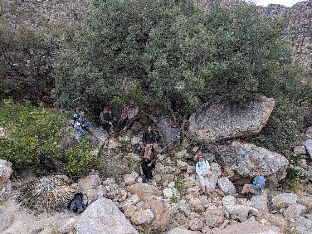 Becoming a Bioregional Herbalist - Spring in the Sonoran Desert (2018)