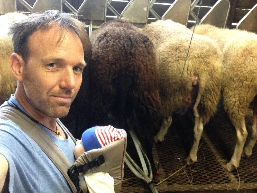 Tim & H milking.JPG