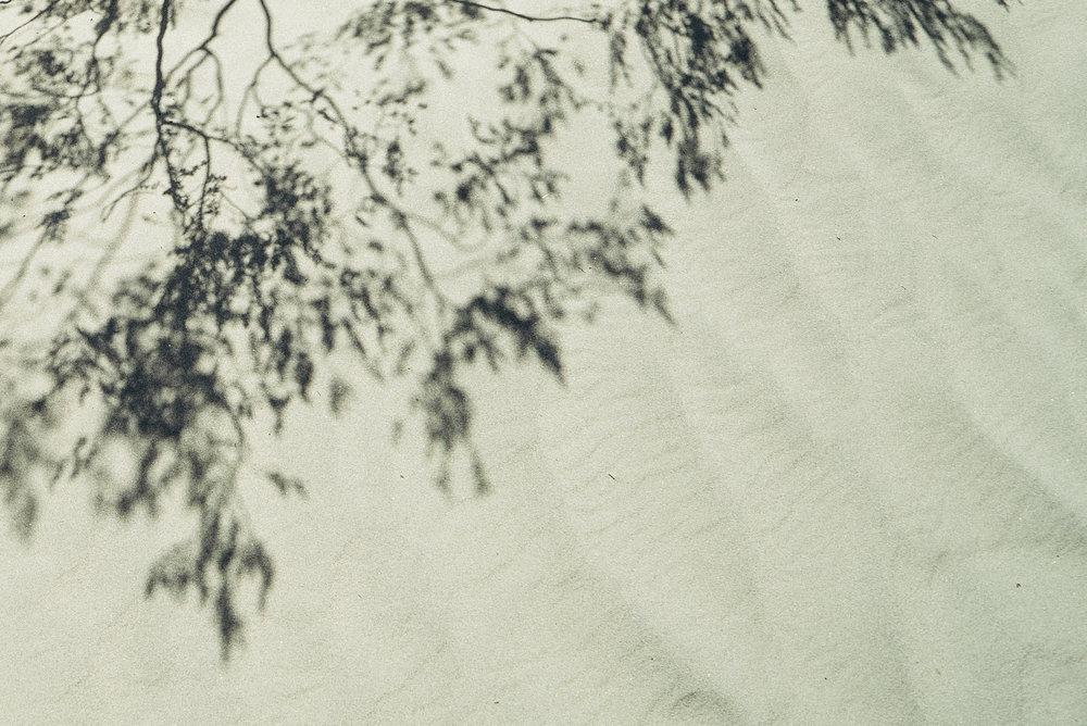 landscape - brush smallclean.jpg
