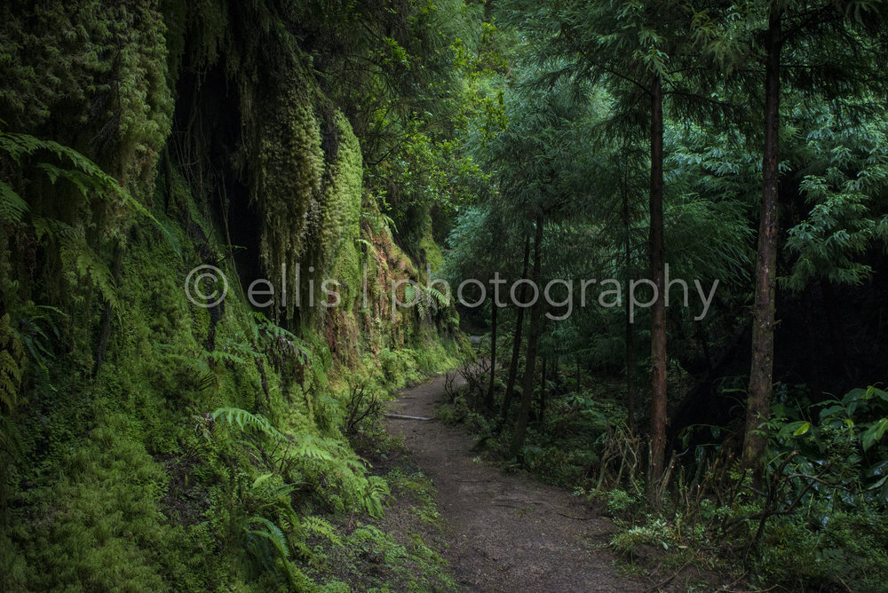Narrow path in the green woods of Sete Cidades, Sao miguel, island of Azores. What will be around the corner? Photo taken by Ellis Photography