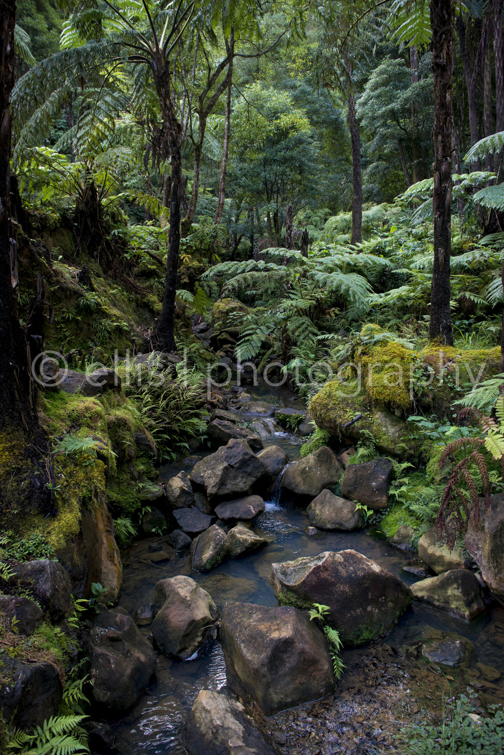 Small waterfall at Caldeira Velha. Beatiful scenery on the island of Sao Miguel, Azores. Little creek surrounded by greens. Picture taken by Ellis Photography