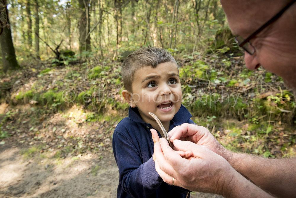 Kleinzoon houdt een hazelworm vast en kijkt vragend naar opa. Day in the life familiefotografie voor ongedwongen, spontane foto's. Dagje in het bos, lekker genieten in de natuur.