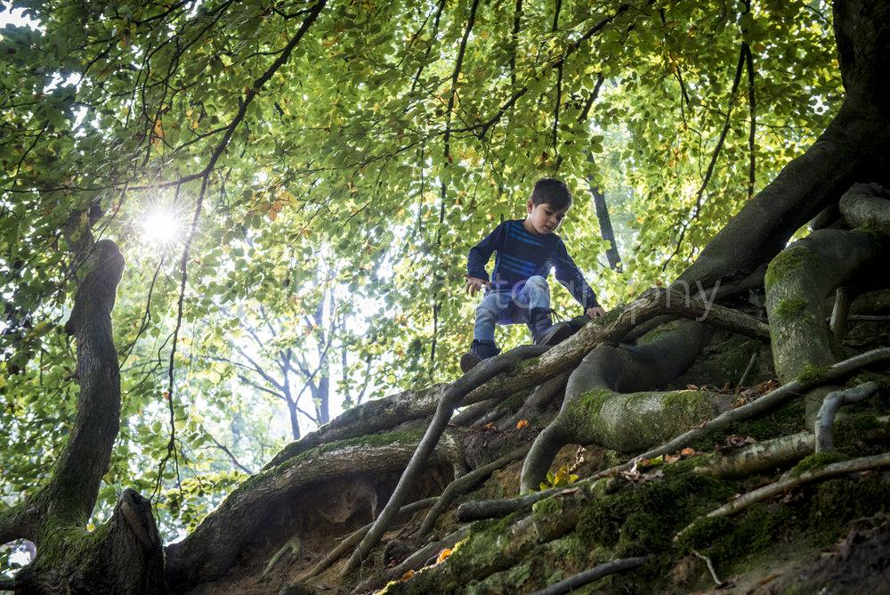 Jongetje is aan het spelen in het bos. Hij klimt op de wortels van een boom. Zonnetje schijnt mooi door de bladeren heen. Ongedwongen daily life foto's door Ellis Photography.