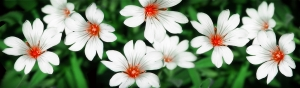 daisybanner.jpg