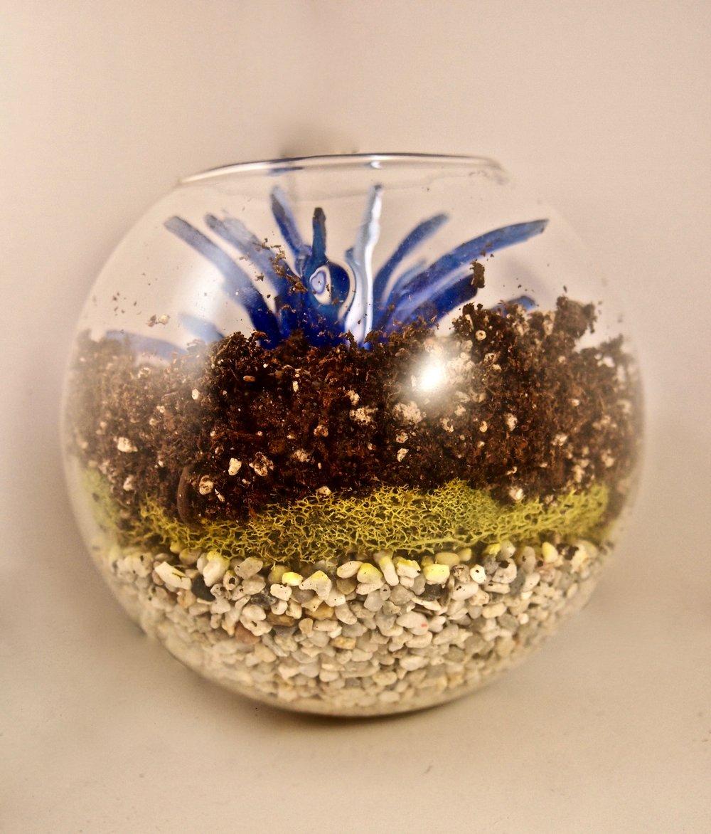"""Terrarium 3 - Blue Floral 5""""x5""""x3"""""""