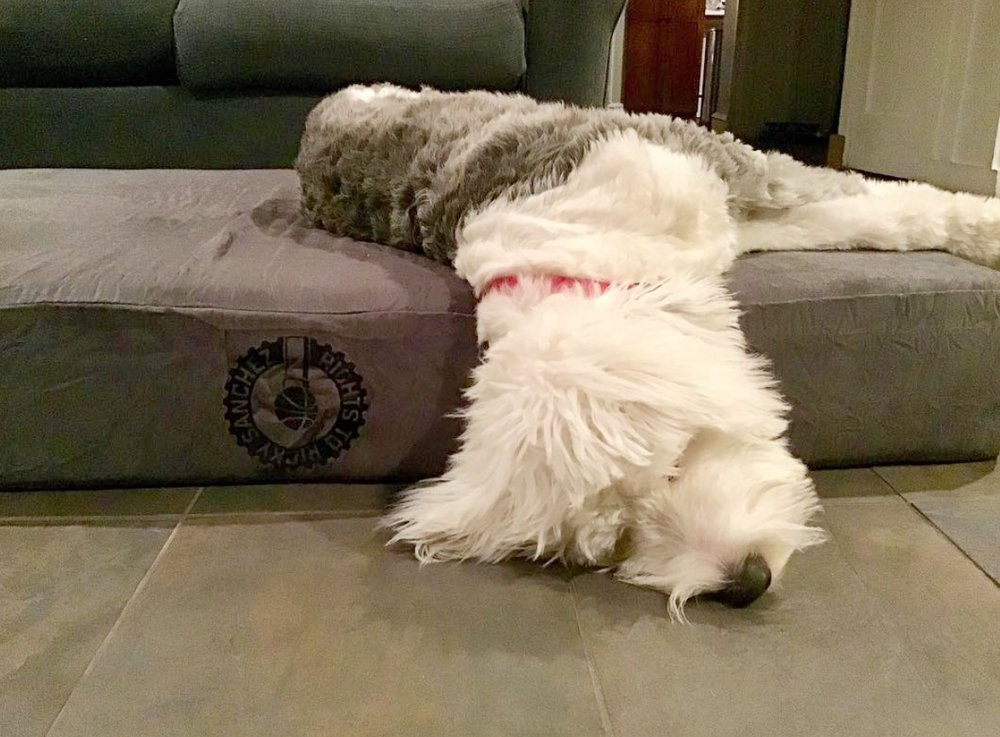 Process Pup Ellie.jpeg