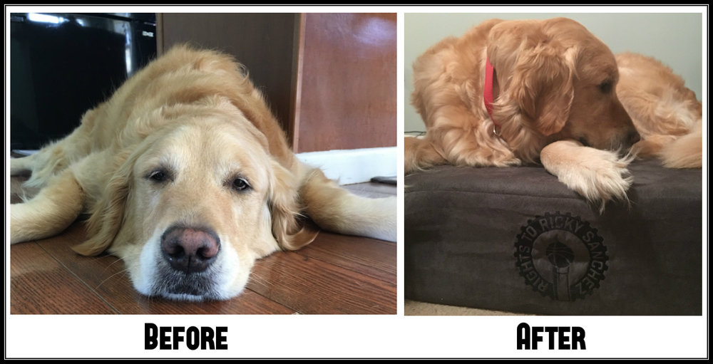 Process Pup Samuel Utley Before and After.jpg