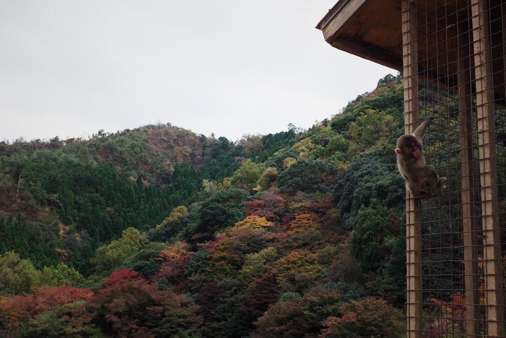 TALMARKES | Japan 05.JPG